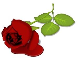 rosasangue